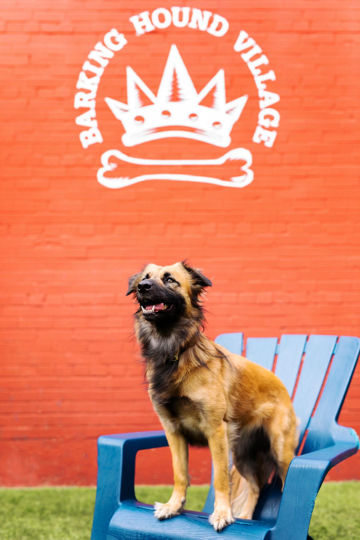 Barking Hound Village Dog Boarding Dallas