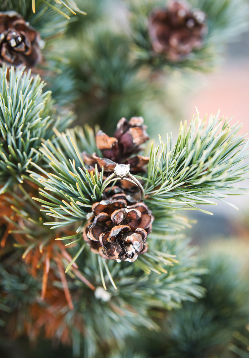 engagement ring on pine cones, winter, Monika Normand Photography